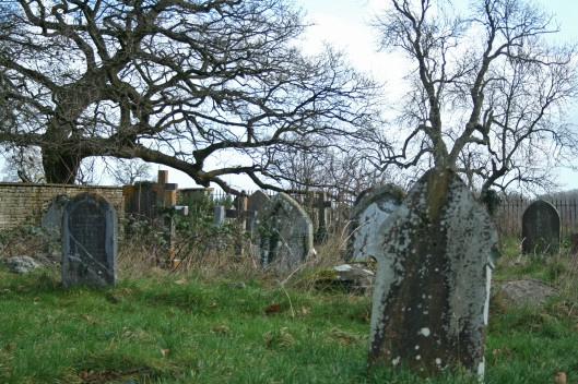 Doesn't this have the classic creepy cemetery look? A sign explained that it's left wild and unmowed to attract wildlife.