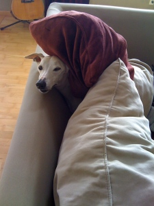 Typical whippet! Kahlil finding the softest, cushiest spot in the house.