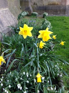 Sorry, I come from a place where it's white with snow and well below zero. At home, I will not see something like this until May. These daffodils are outside St. John the Baptist church.